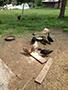 ducklings feeding