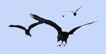 4 colly birds