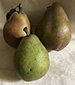 Magness pears