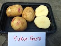 Yukon Gem